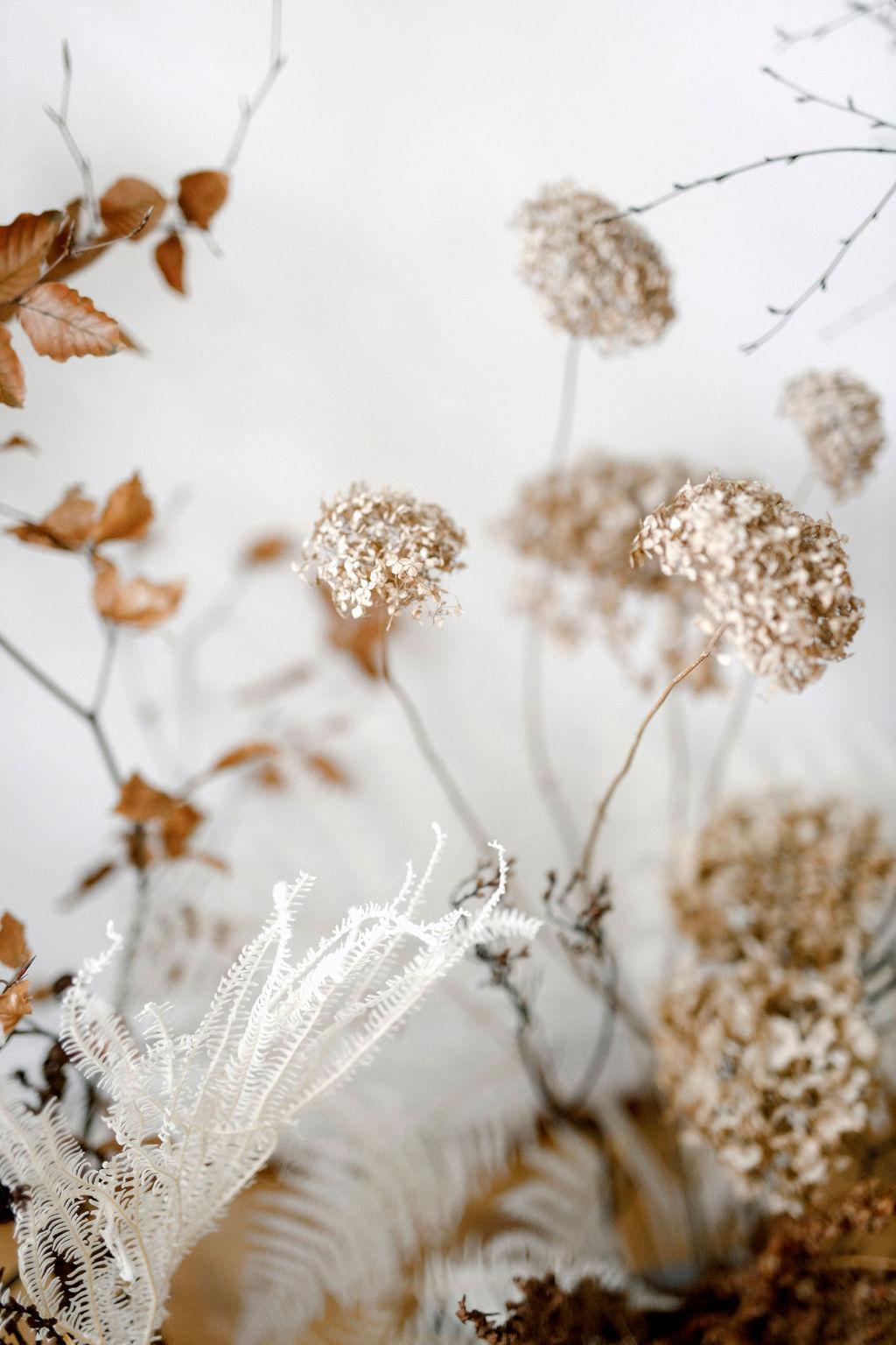 Trockenblumen Gräser